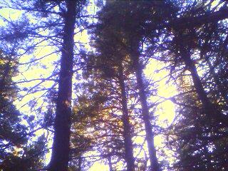 upload:hike/20090615/IMAGE_044.jpg